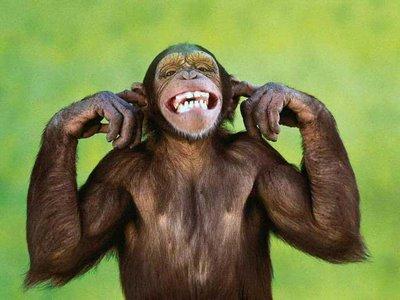 not-listening-monkey