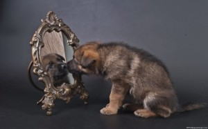 Dog-Looking-At-Mirror-Images-540x337