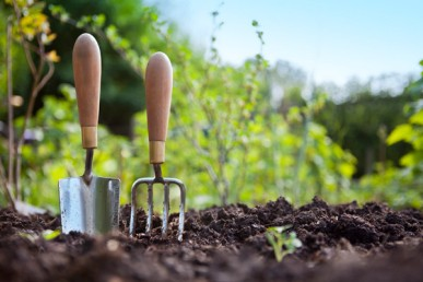 gardening_in_mn