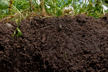 What-Is-Soil-Organic-Matter_Natural-Resources-Conservation