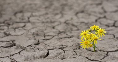 flower-hope-earth-climate-change-e1493332891171